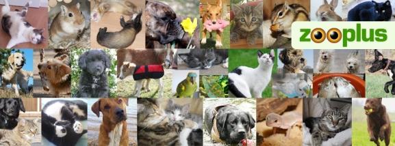 zooplus producten huisdieren