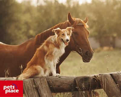 Petsplace paard hond