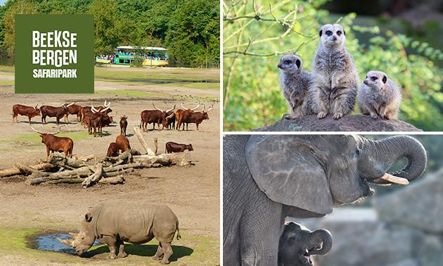 Entree Safaripark Beekse Bergen @ Socialdeal
