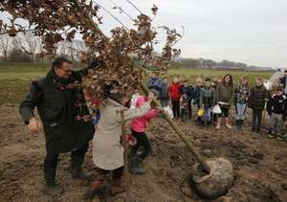 Gemeente trakteert op 80 gratis bomen [Dordrecht]