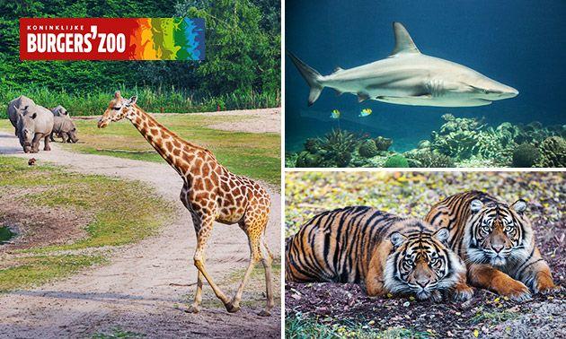Entreeticket voor Burgers' Zoo Arnhem, €17,50@tripper