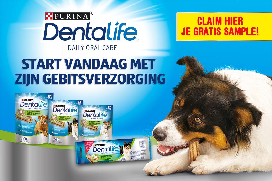 Gratis sample Dentalife