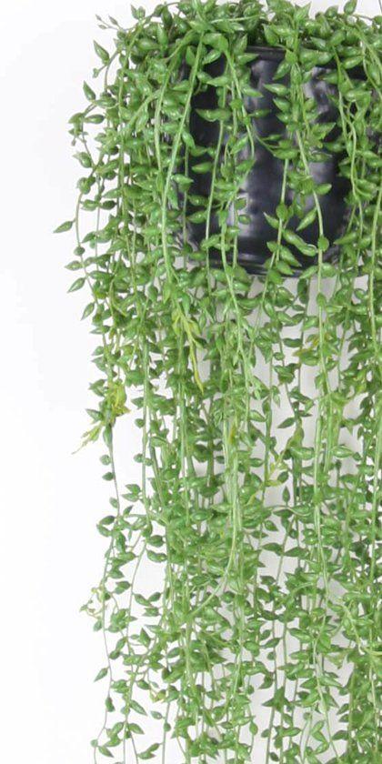 Senecio nep hangplant - 70 cm - groen @bol.com
