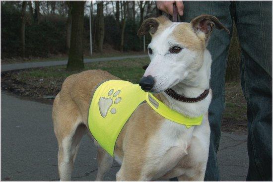 Beeztees Safety Gear Veiligheidsvest hond Maat L voor €2,98 @ Bol.com