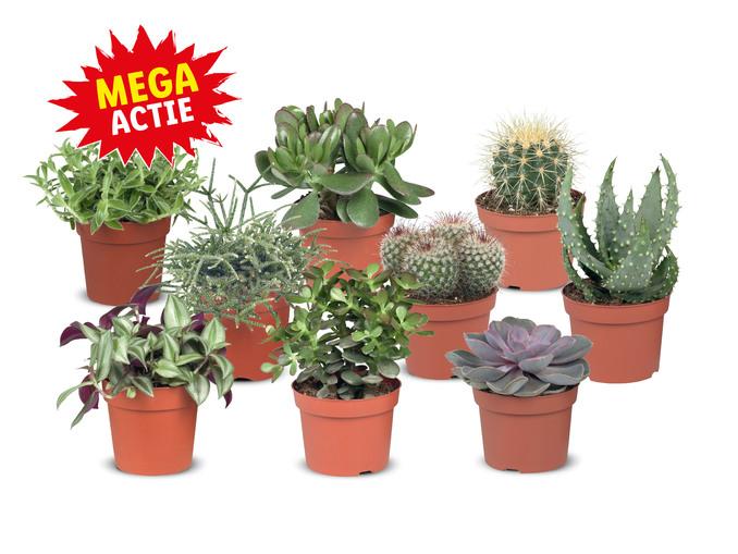 Cactus of vetplant 2 voor 4 euro:)