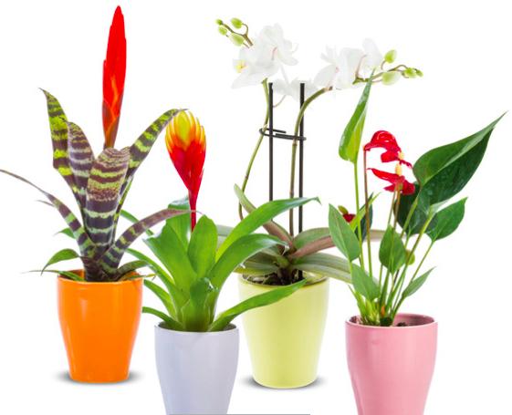 Tropische mini-plant bij Lidl. 2,99 euro. Vanaf 14.10