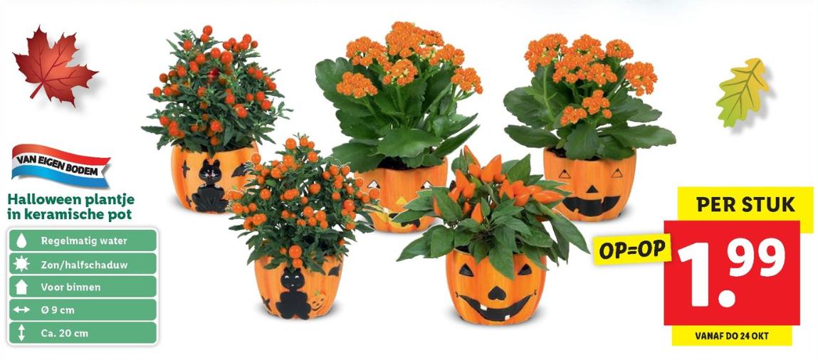 Plantje in keramische Halloween pot voor €1,99 @ lidl [winkels]
