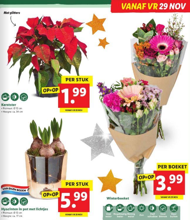 Lidl: planten en bloemen van €1,99 tot €5,99