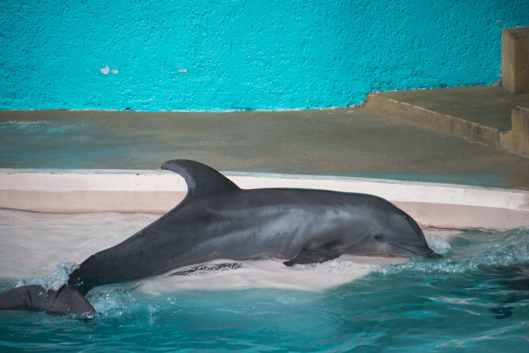 Gratis dolfijnen tas bij tekenen petitie Worldanimal protection.