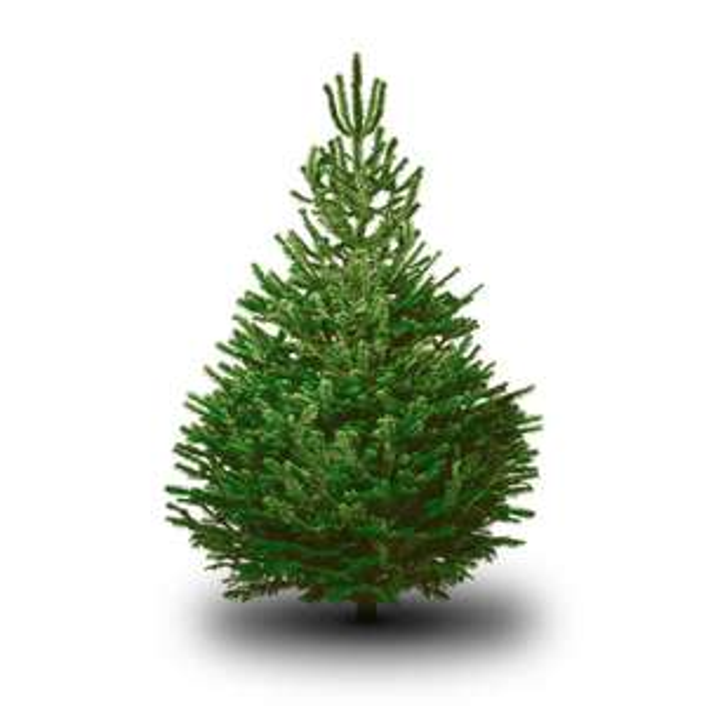 [GRENSDEAL] Gratis kerstbomen @ Brico