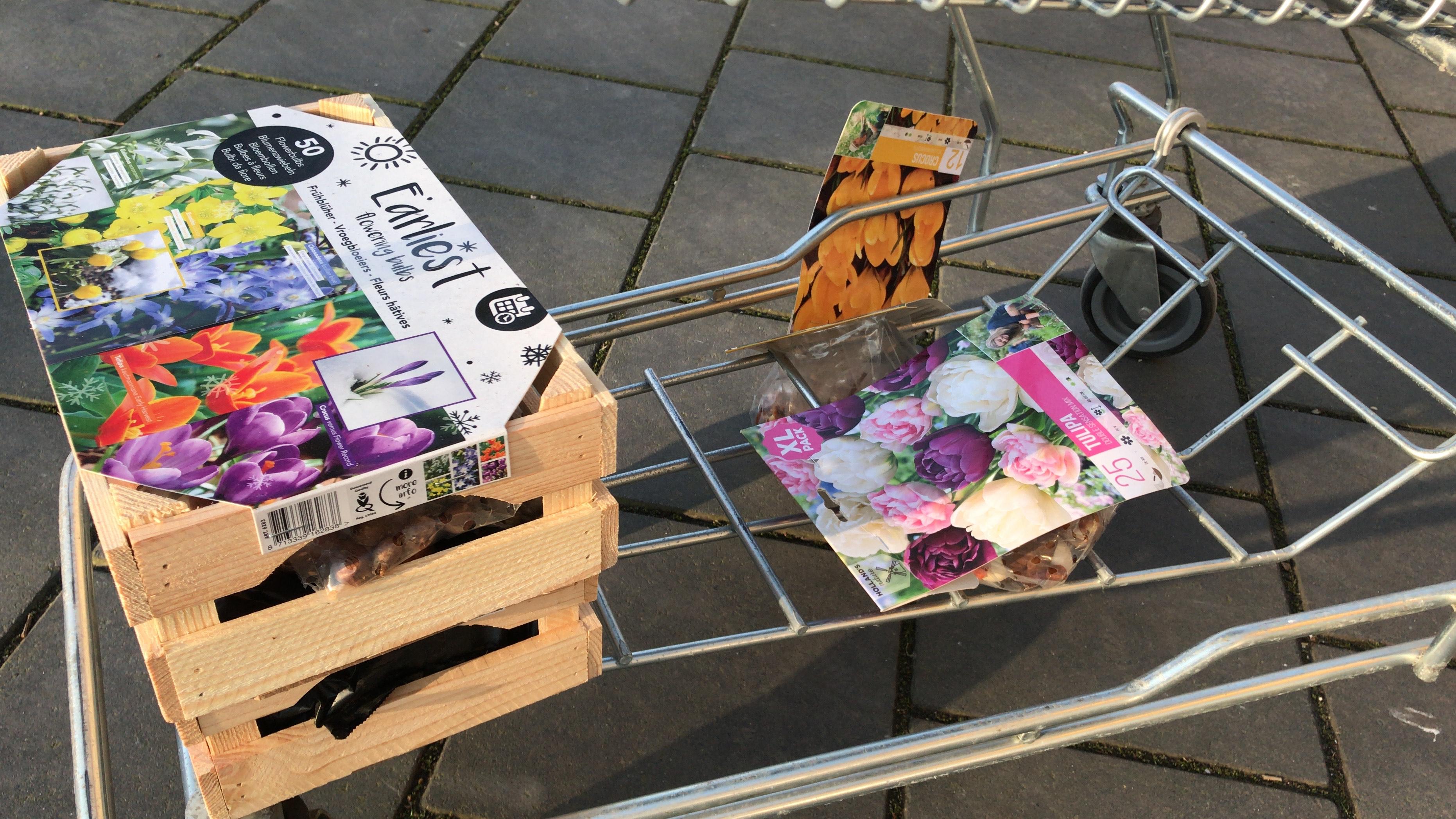 Gratis bloembollen Lokaal praxis Hilversum