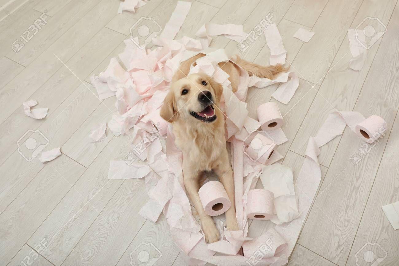 Gratis 2 samples honden- en/of kattenvoer (2x 100 gram)