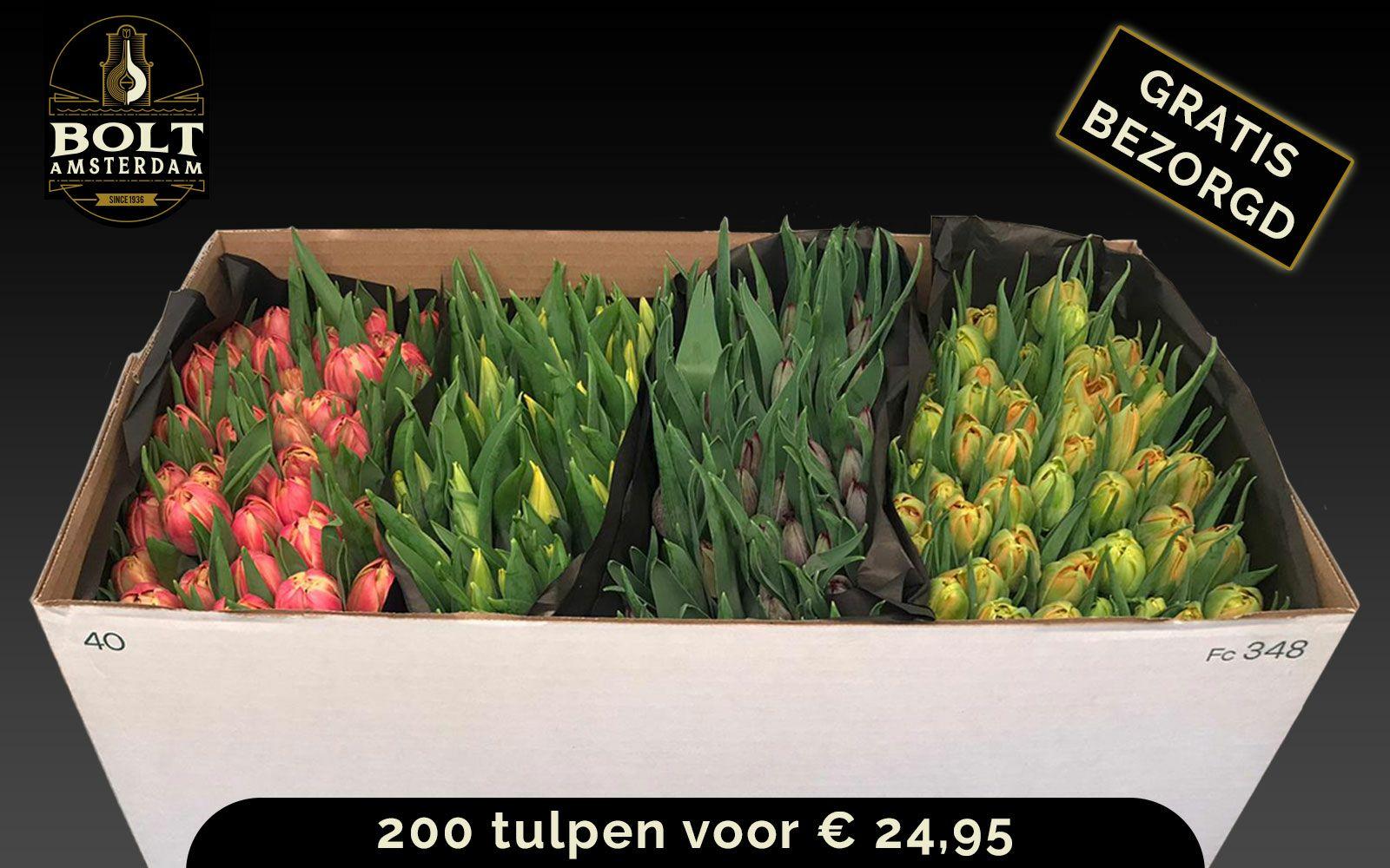 200 tulpen vanaf €24,95 @ Bolt-Amsterdam.nl