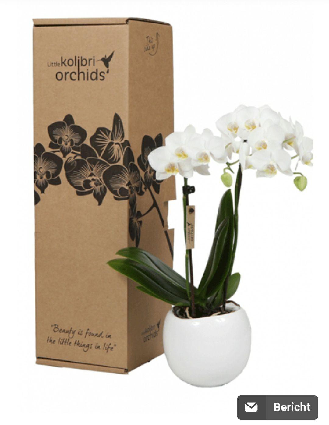 Mini orchideeën met 50% korting