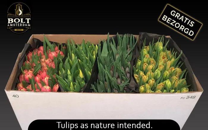 200 tulpen vanaf €35,95 @ Bolt-Amsterdam.nl