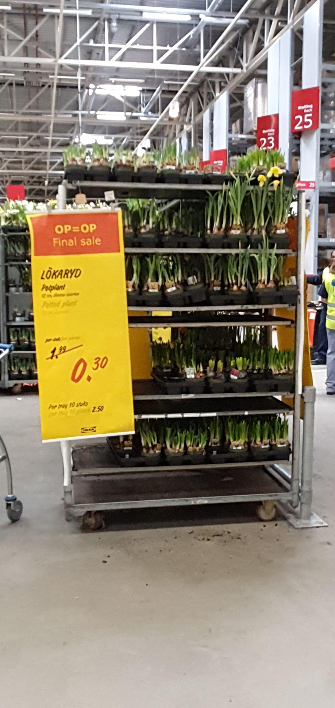 Narcissen en andere bloembollenplanten 0.30 ct bij IKEA Delft