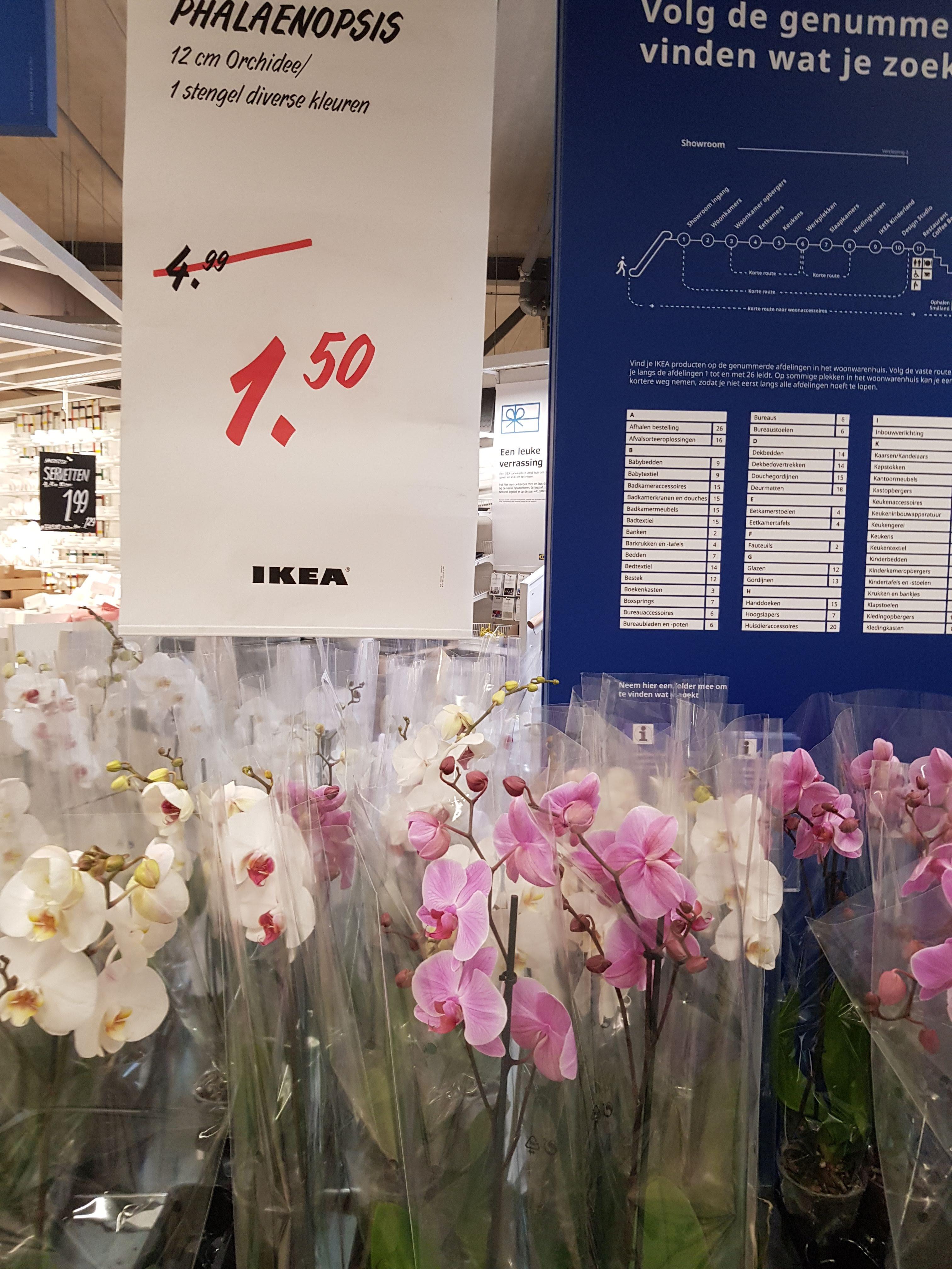 [IKEA Utrecht] Orchidee (Phalaenopsis) voor €1,50