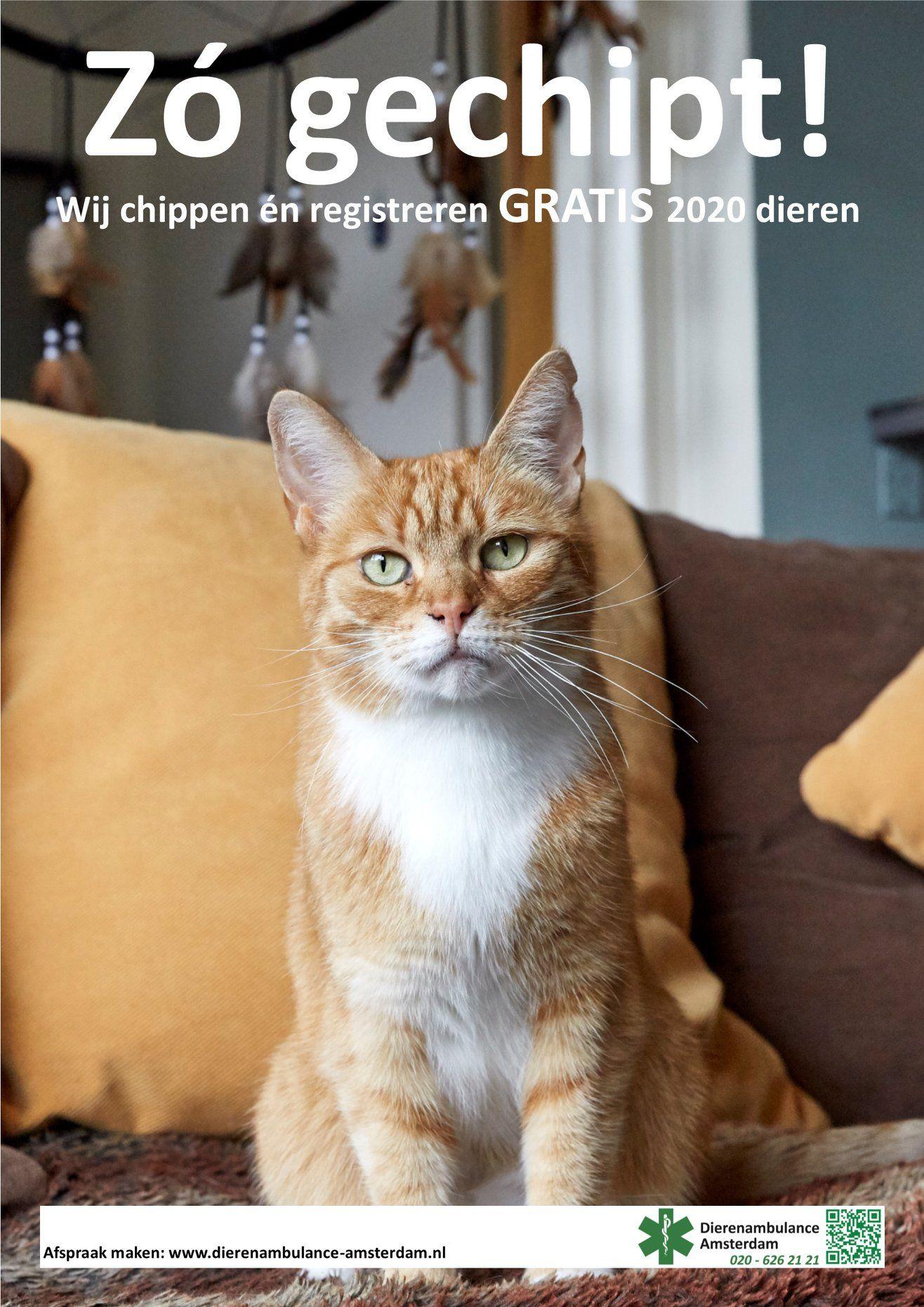 gratis honden, katten en konijnen chippen In Amsterdam