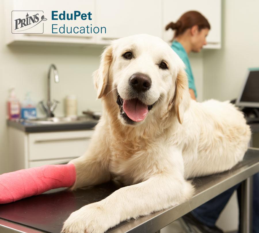 Basiscursus EHBO voor hond en kat (Van €25 voor €12,50)