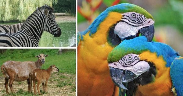 Zoo Veldhoven @ Tripper