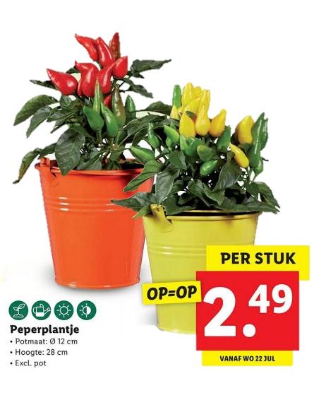 Pe(p)perplantje bij Lidl voor €2,49 (v.a. woensdag 22/07)