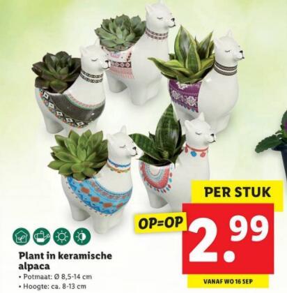 Vanaf woensdag Keramische alpaca pot met plantje erin €2,99 Lidl
