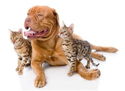 1 + 1 gratis op honden & kattenvoer bij Brekz