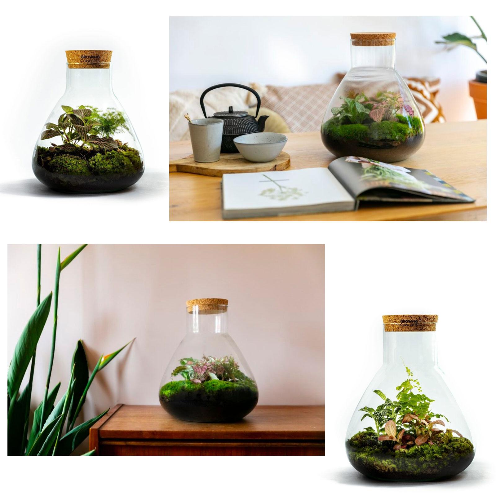 30% Korting op div formaten terraria @ Growing Concepts