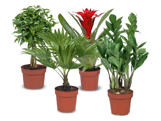 Lidl - Plantenmix