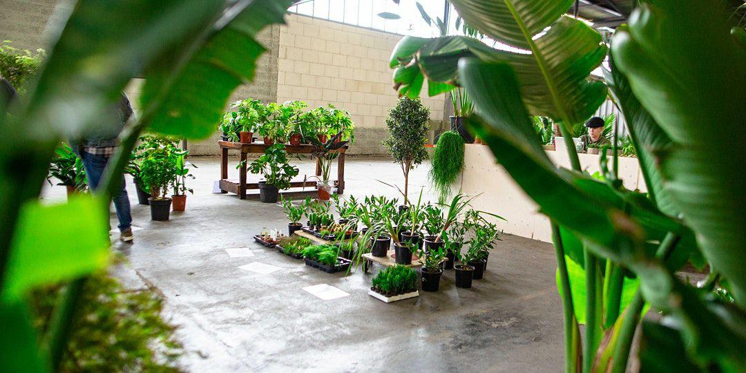 Leegverkoop plantendistributeur in Amsterdam-Noord