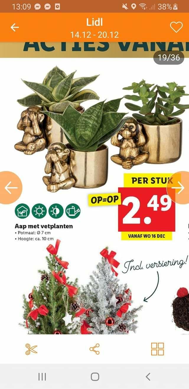 Vetplantjes horen zien en zwijgen LIDL (winkel)