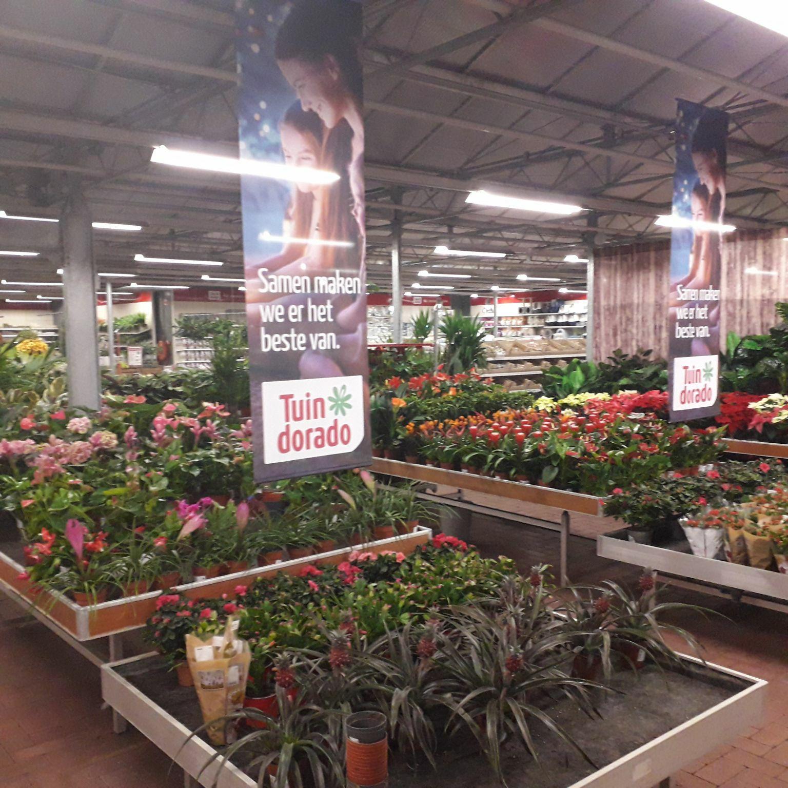Huis vol met planten (20 stuks) voor € 55, inclusief verzendkosten, regio zuidoost friesland