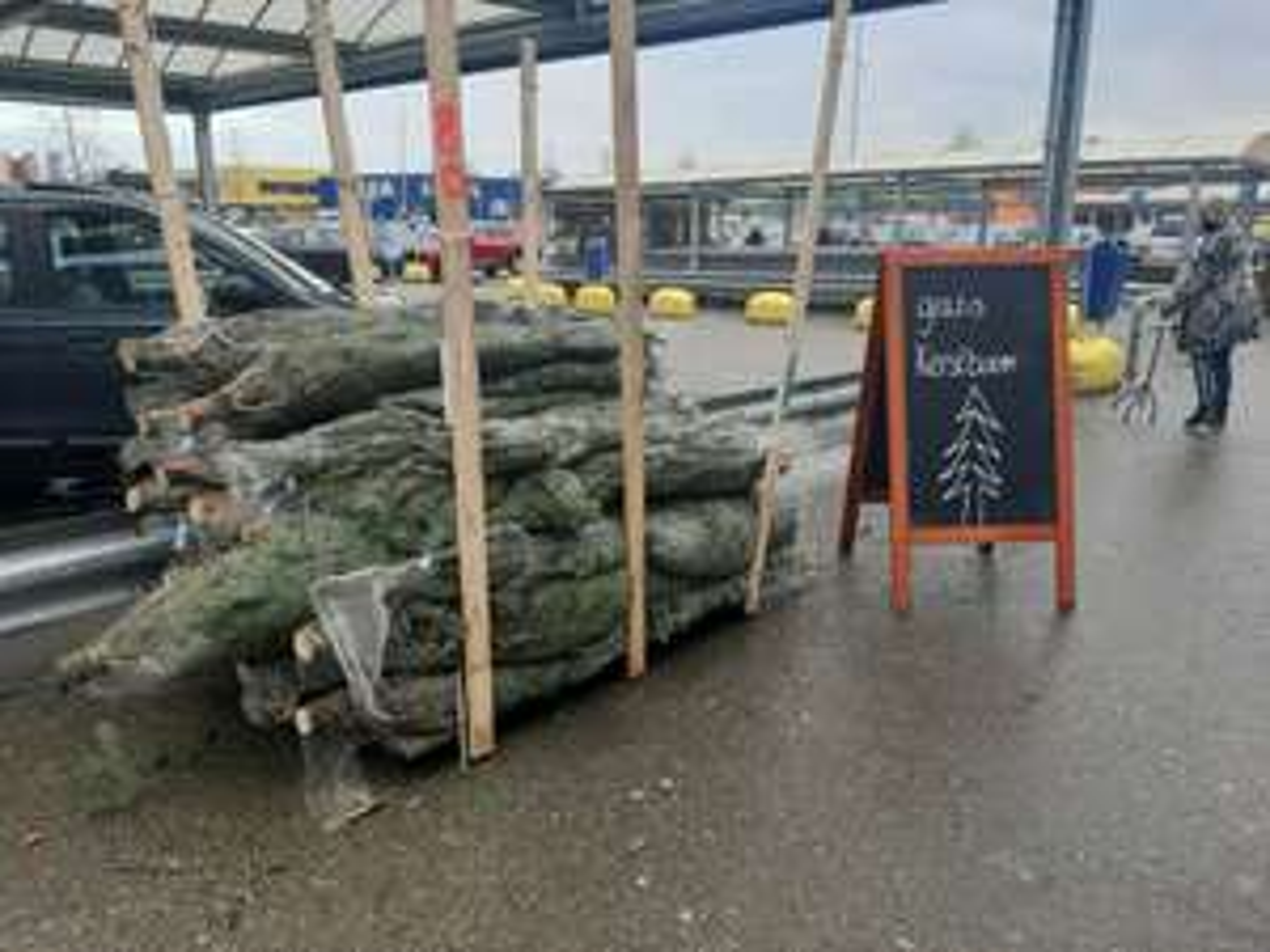 Gratis Nordmann kerstbomen Makro Duiven