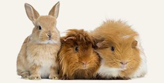 Kortingscode voor €7,50 korting op dierenartikelen @ Bol.com