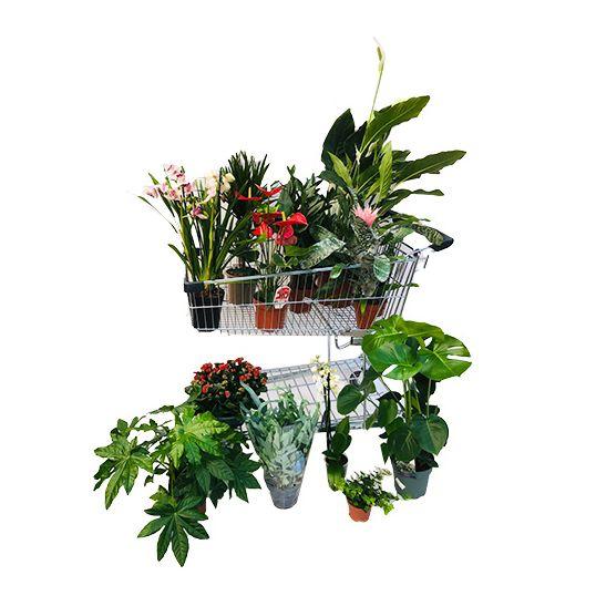 [lokaal] 12 kamerplanten van 100 euro voor 35 euro