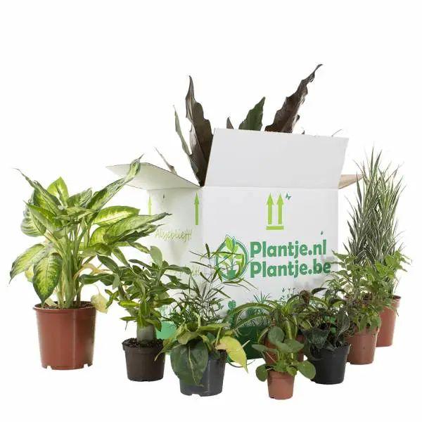Veel planten voor weinig - Kneusjesbox @plantje