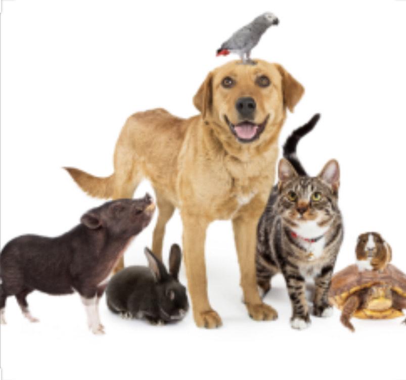 4=3 op vele huisdierbenodigdheden & voeding (waarschijnlijk ook i.c.m. Sparabo)