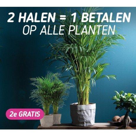 Diverse soorten Sieraden en Kamerplanten met korting EN 2e gratis