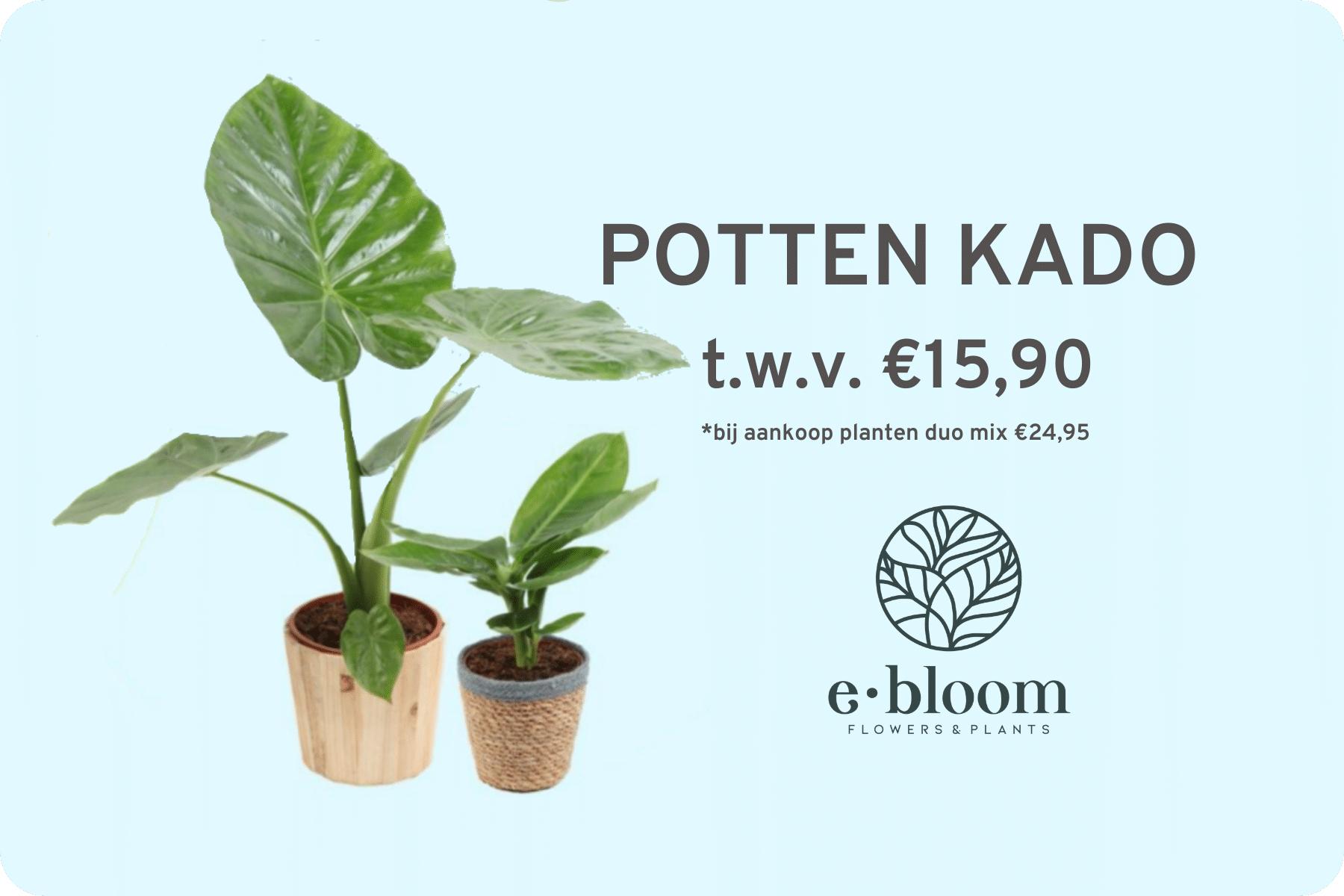 Kadootje van KPN - Gratis gerecyclede vaas of pot als je een plant of boeket van e•bloom koopt.