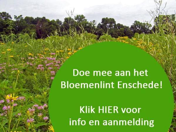 Lokaal. Gratis bloemzaad in de gemeente Enschede