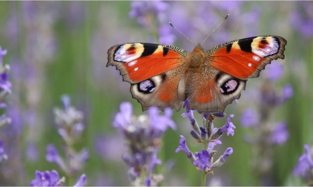 Gratis insecten-red-pakket