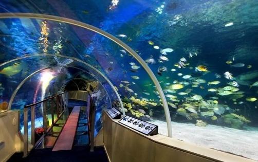 Waardebon voor tweede kaartje gratis @ Sea Life Scheveningen