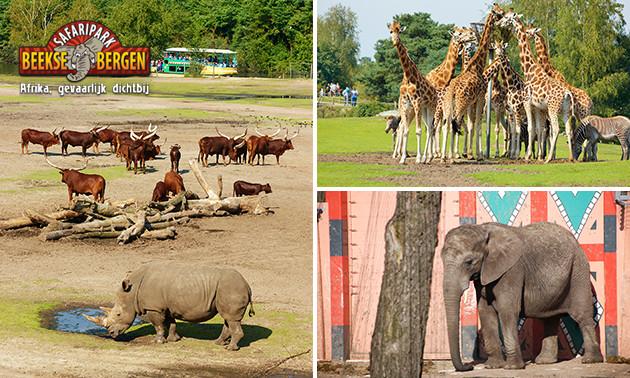 Entree Safaripark Beekse Bergen Hilvarenbeek @ Socialdeal