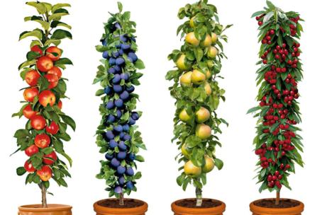 Set van 4 Fruitbomen voor € 29,95 + € 5,95 verzendkosten @ Marktplaats Aanbieding