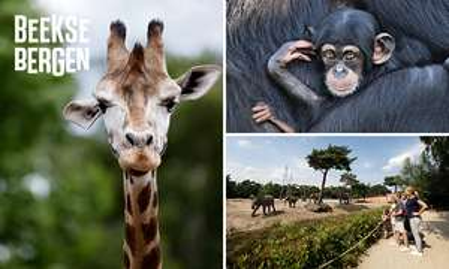Entree Safaripark Beekse Bergen Hilvarenbeek @ Social Deal