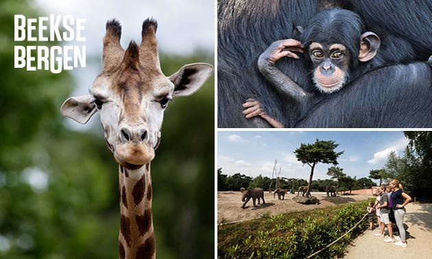 Voor 9 euro pp naar safaripark Beekse bergen