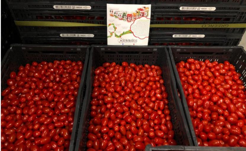 UPDATE: Gratis kilo's Tommies Snacktomaatjes in Zuid/Noord Holland en Brabant @ Greenco