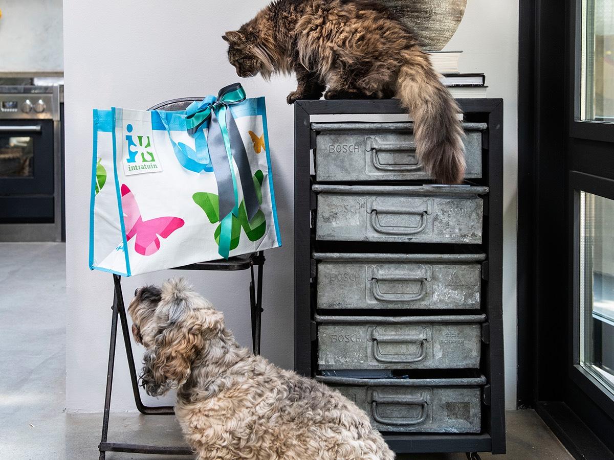 Gratis goodiebag voor je huisdier bij aankoop voor je kat/hond @Intratuin