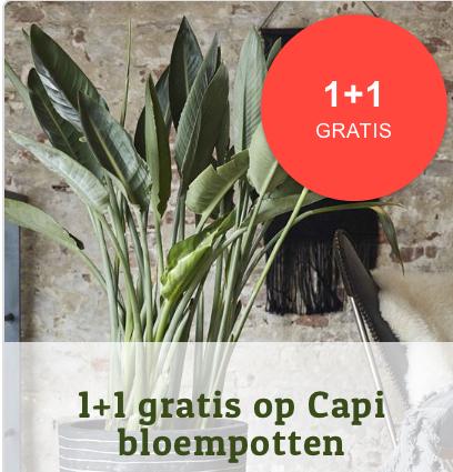 Actie: 1+1 gratis op Capi bloempotten @ Fonq