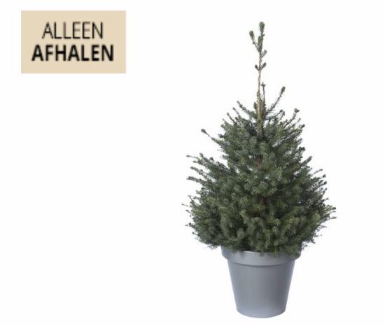 [Welkoop] Tot 5 euro korting op kerstbomen (incl. pot)